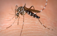 Manage mosquitoes while enjoying the great outdoors