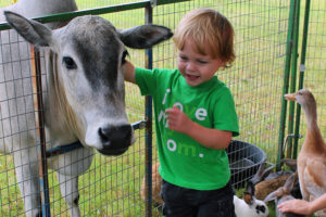 Jaxon Cave, 2, of Sachse shares a moment with a friendly cow, a piglet as well as some fowl and rabbits during a July 28 visit to the petting zoo at the Sachse Library.