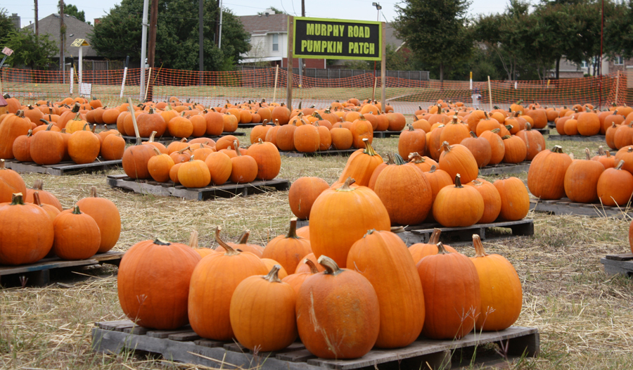 Pumpkin patches offer family fun, photo opportunities