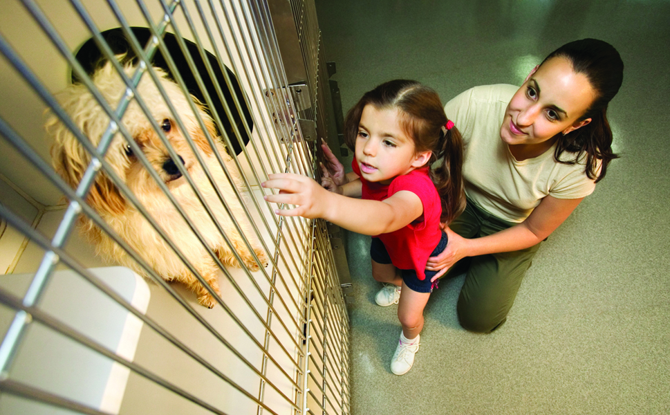 Shop the local shelters; find your new best friend