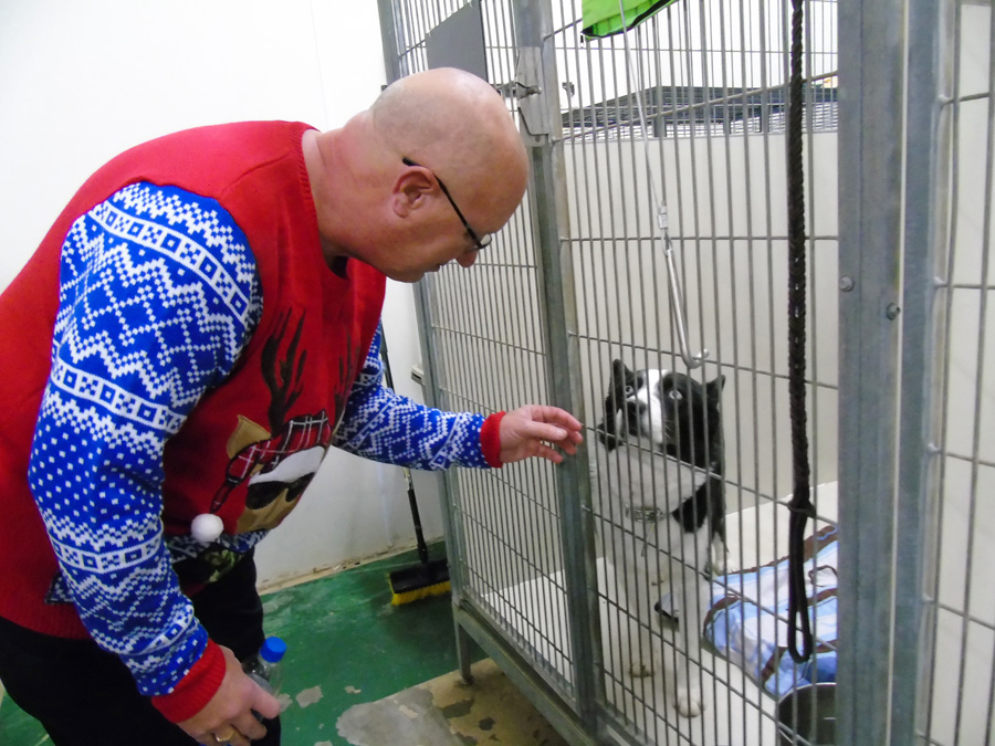 Council reviews animal shelter