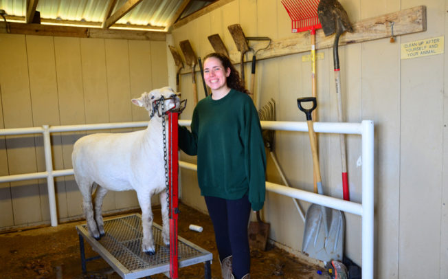 Sachse High students show, sell livestock, plants