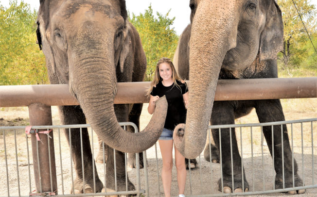Pachyderms provide life lessons