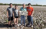 Last cotton harvested