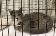 Animal shelter plans adoption event