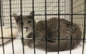 Animal shelter plans adoption event