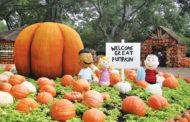 In search of great pumpkin fun